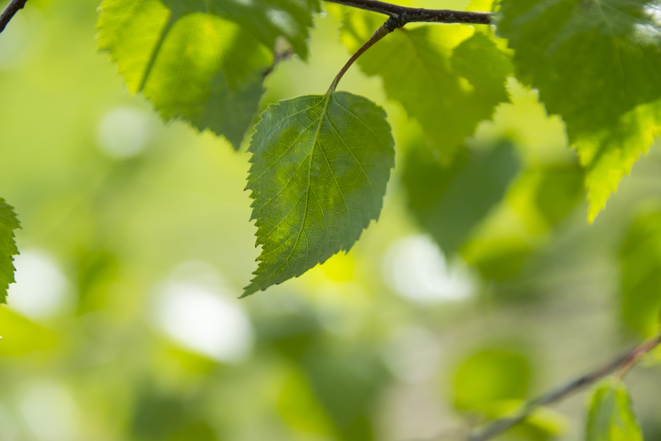 green-color-leaves