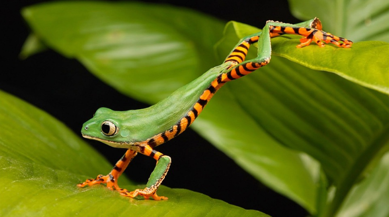 A jumping frog that survived after much struggles