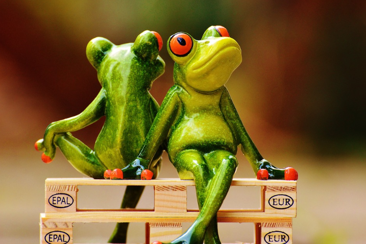 Two frogs sitting close to each other as best friends